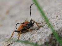 Dřevokazný hmyz
